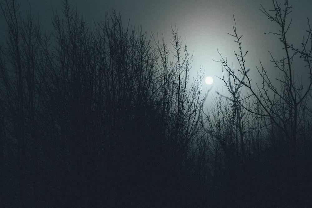 grass and moon at night