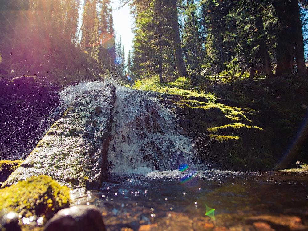 waterfalls near forest trees