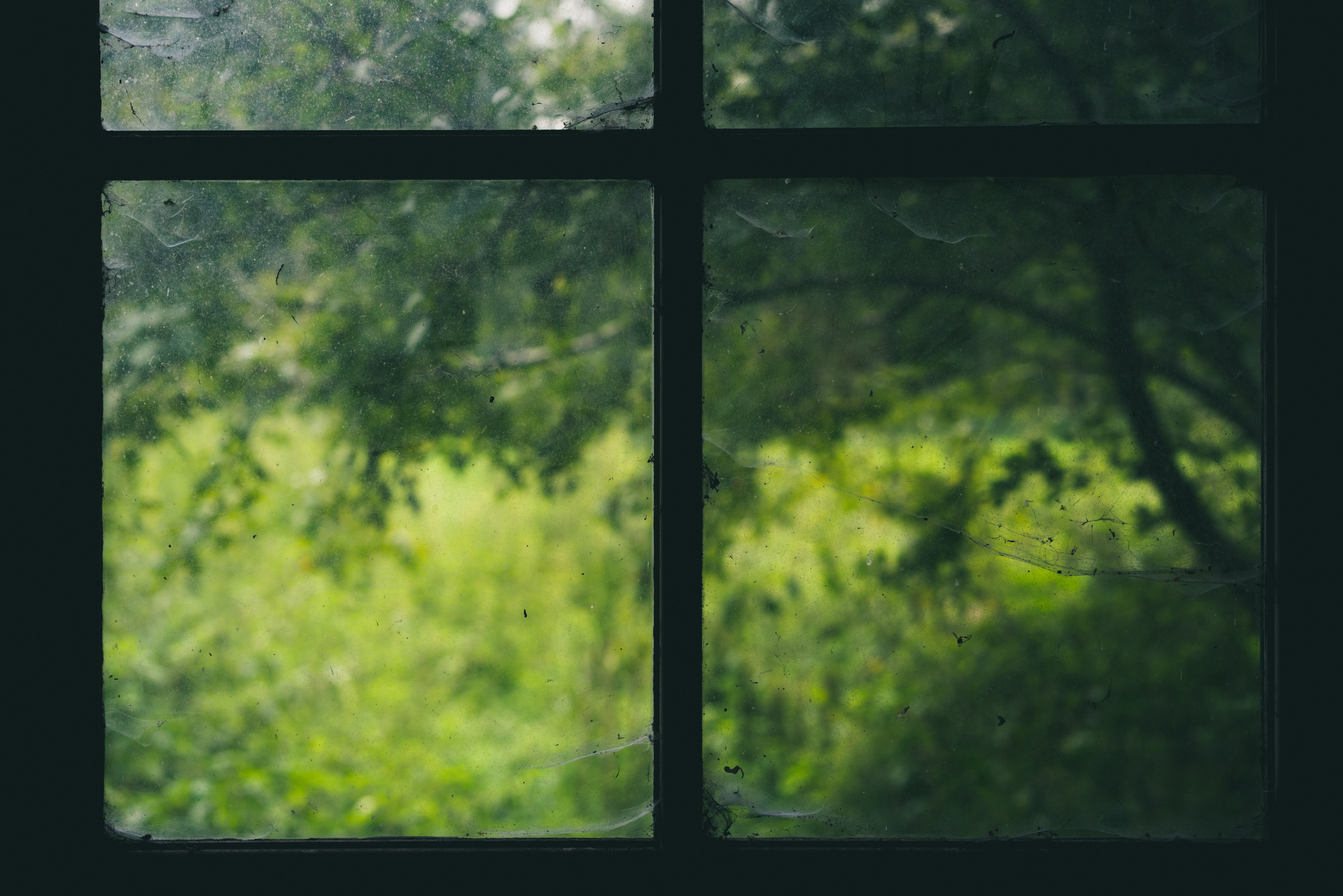 trees and black window grille