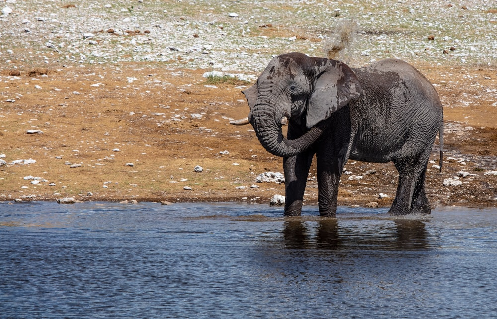 elephant standing in body of water