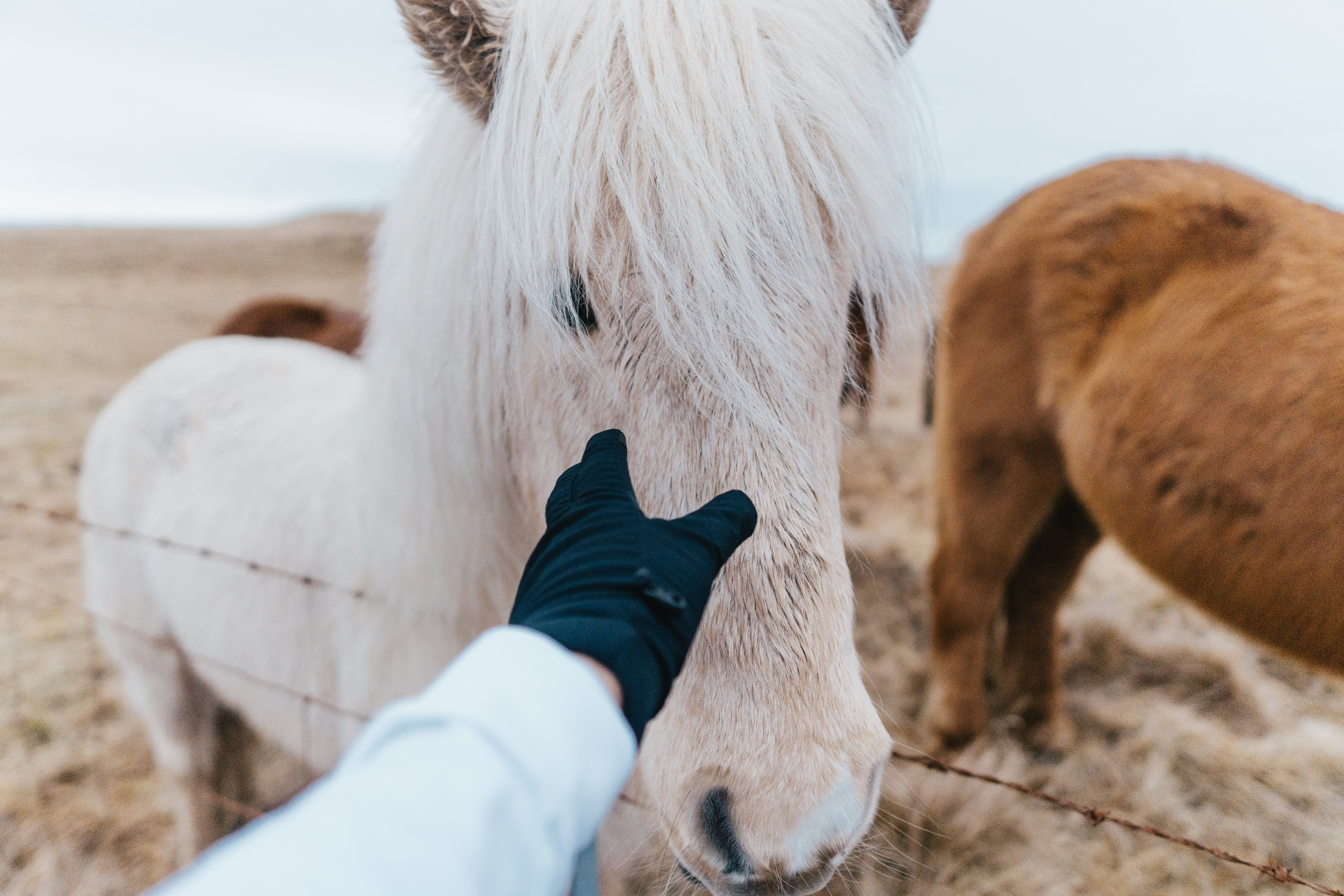 shallow focus photo of person touching gray horse