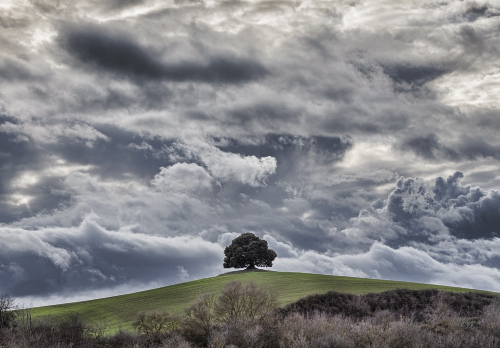 green tree under cloudy sky
