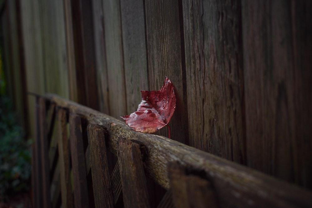 red leaf on brown wooden frame