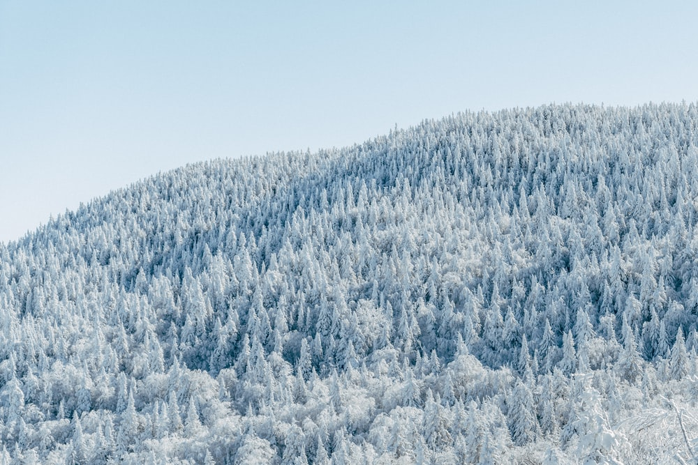 mountain covered with trees during daytime