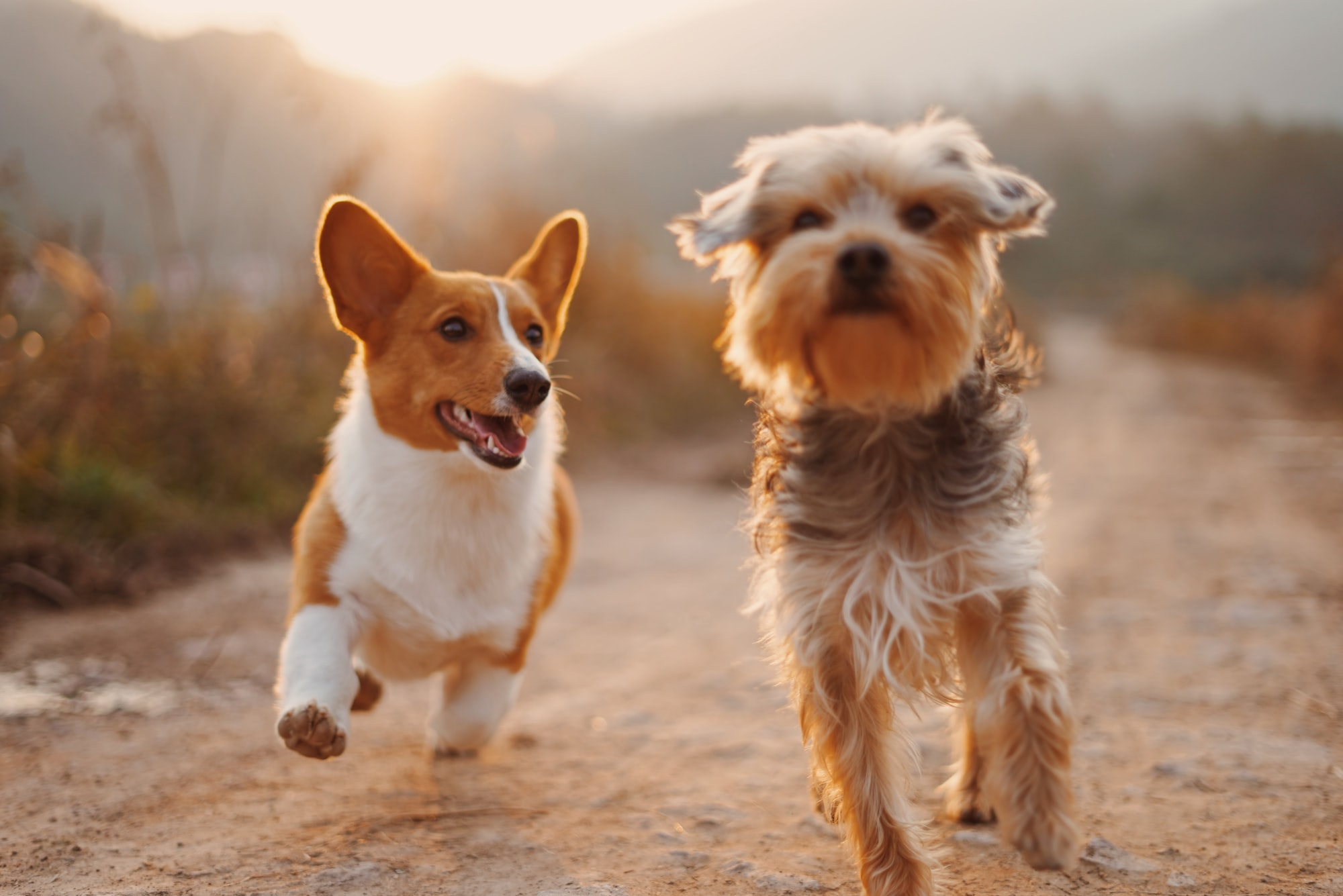 Choosing the right dog breed.