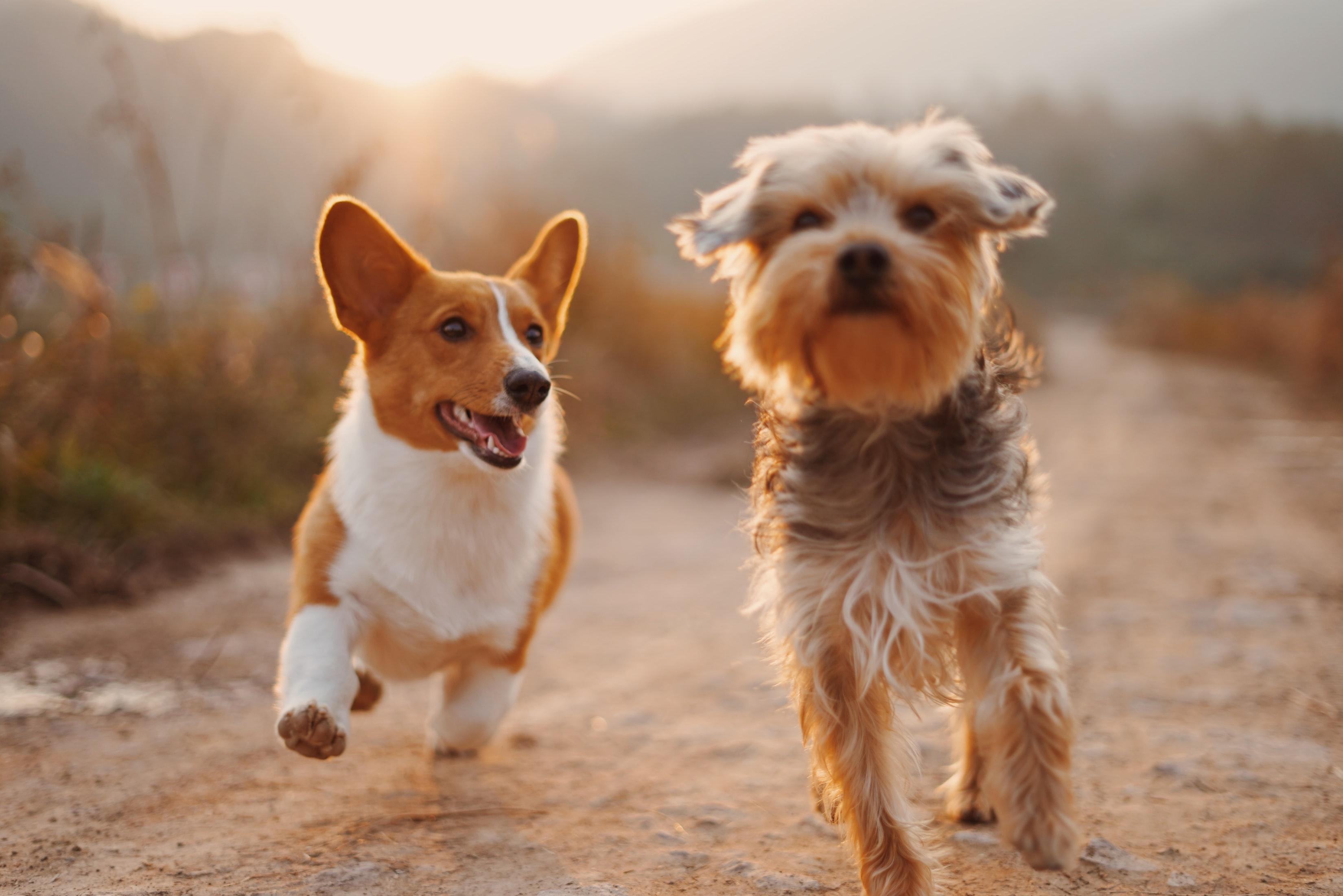 Cute Puppies Running