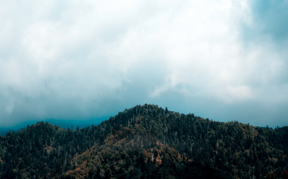 trees on mountain under cloudy sky