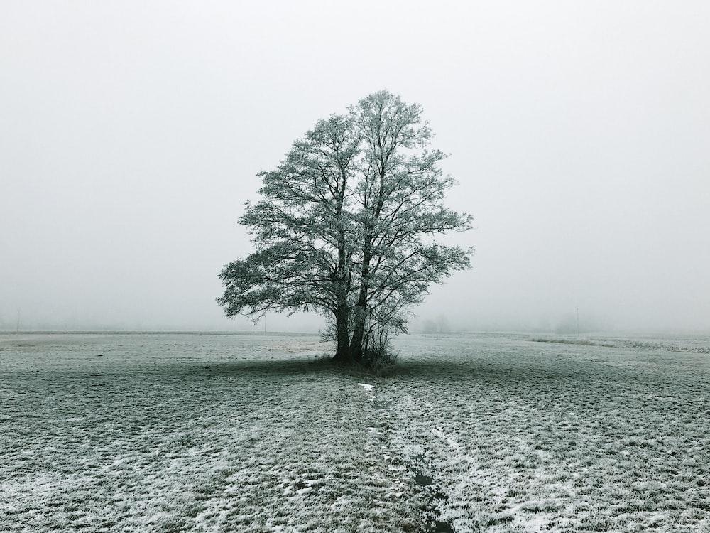 tree under white sky