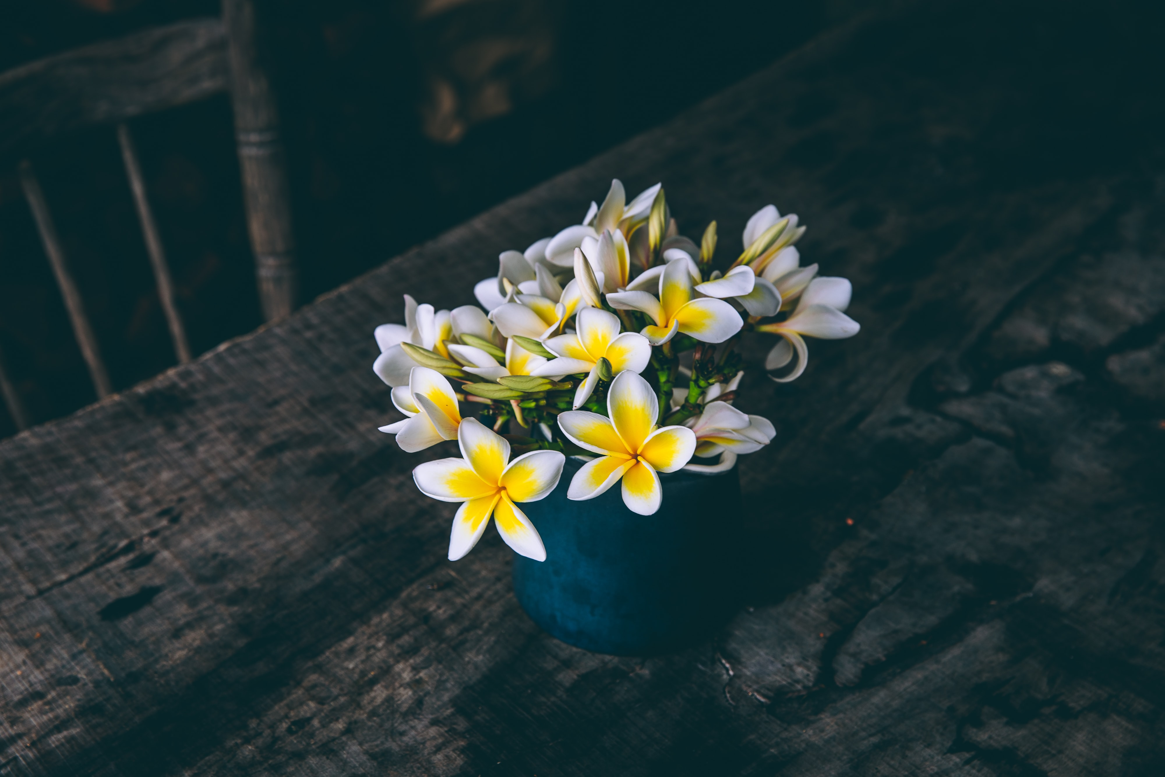 white and yellow petaled flowers in vase