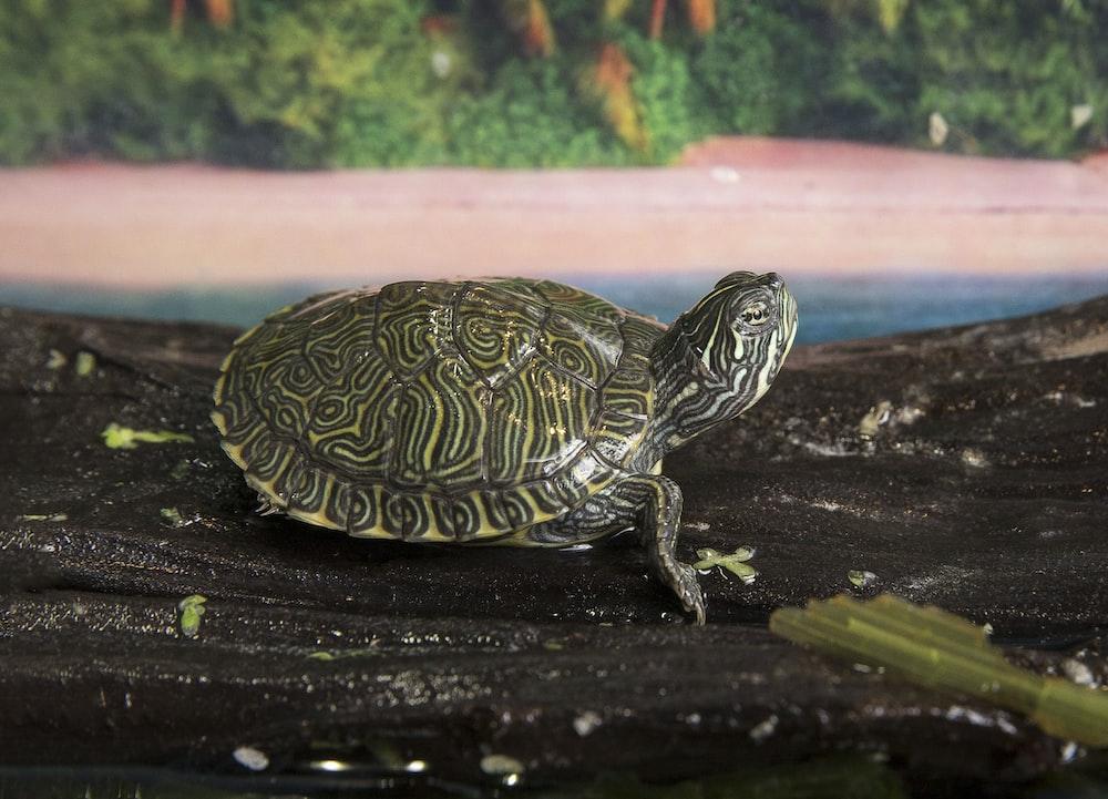 gray tortoise on focus photography