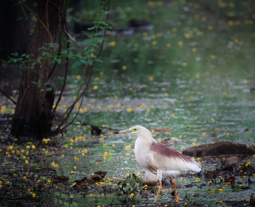 white and brown bird on selective focus photography