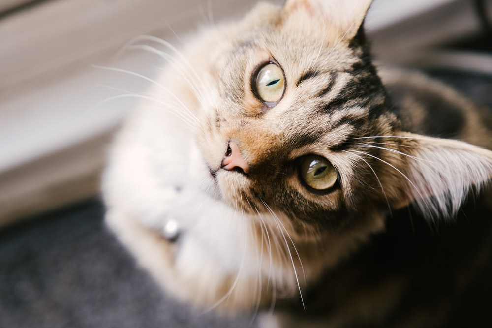 selective focus photography of brown tabby cat