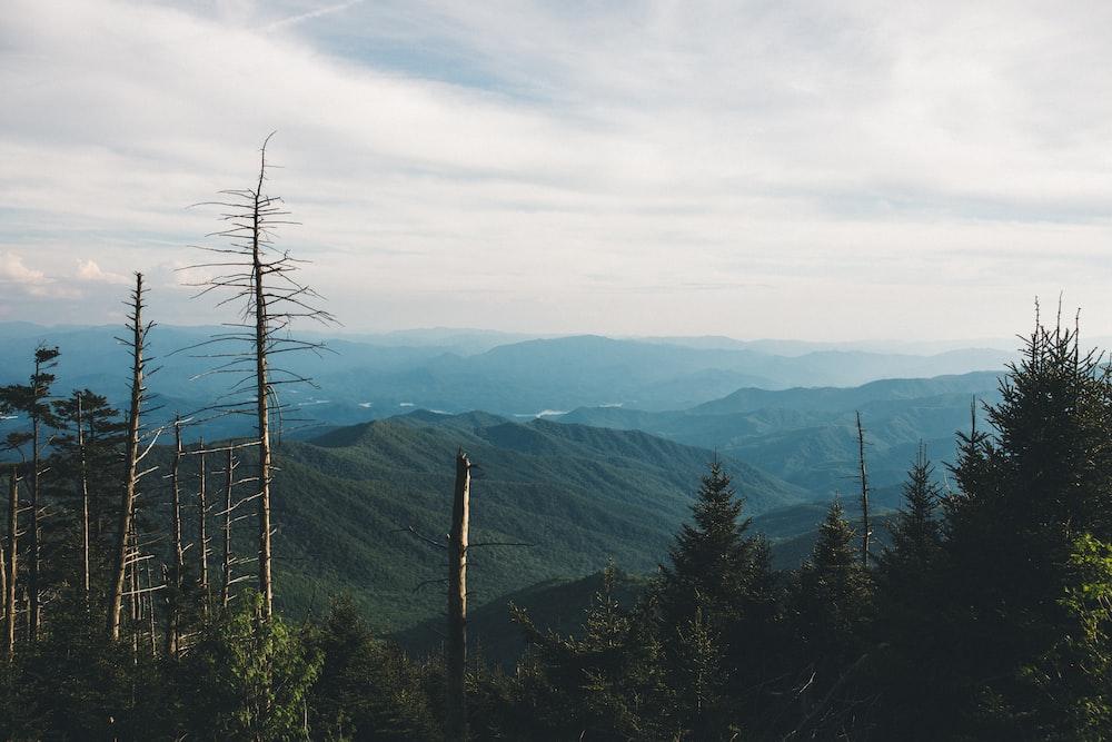 pine tress on mountain during daytime