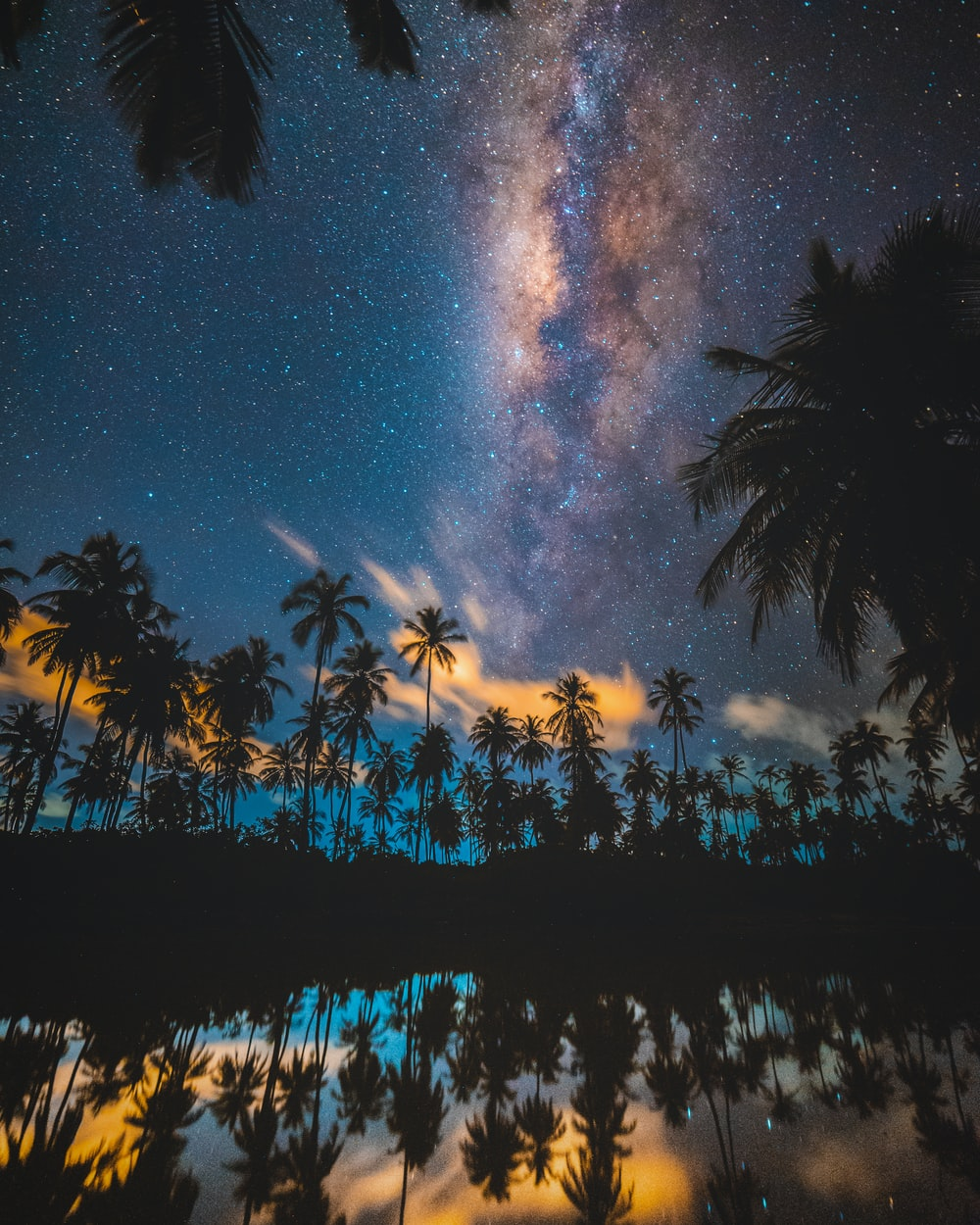 silhouette of coconut trees reflected on body of water