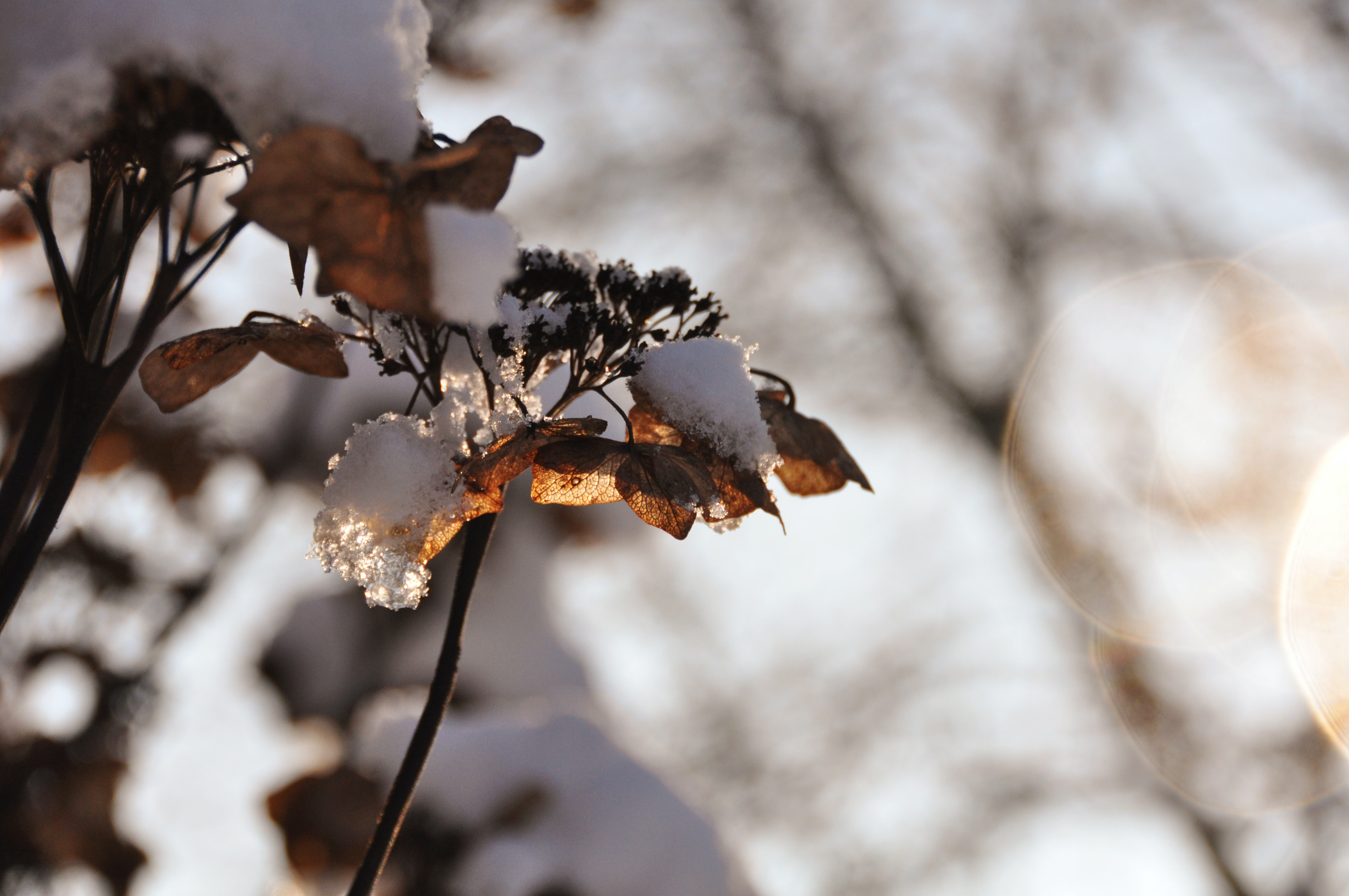 selective focus photography of ice melting on brown leaves