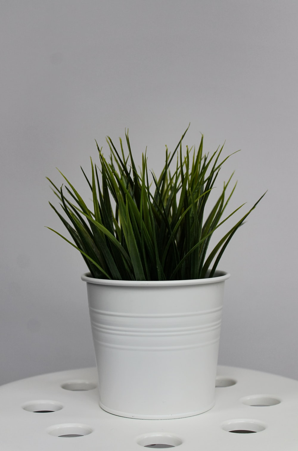 green-leafed plant on white flower pot