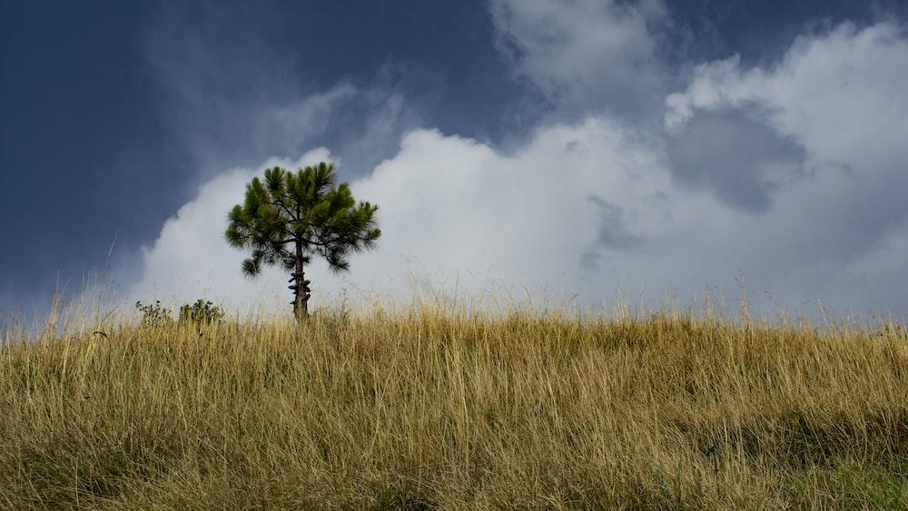 gree n tree surrounding brown grass field