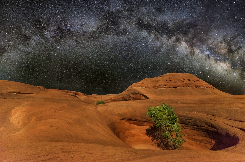 tree in the middle of crate under milkyway photo