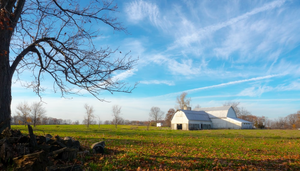 barn house near bare trees on field at daytime