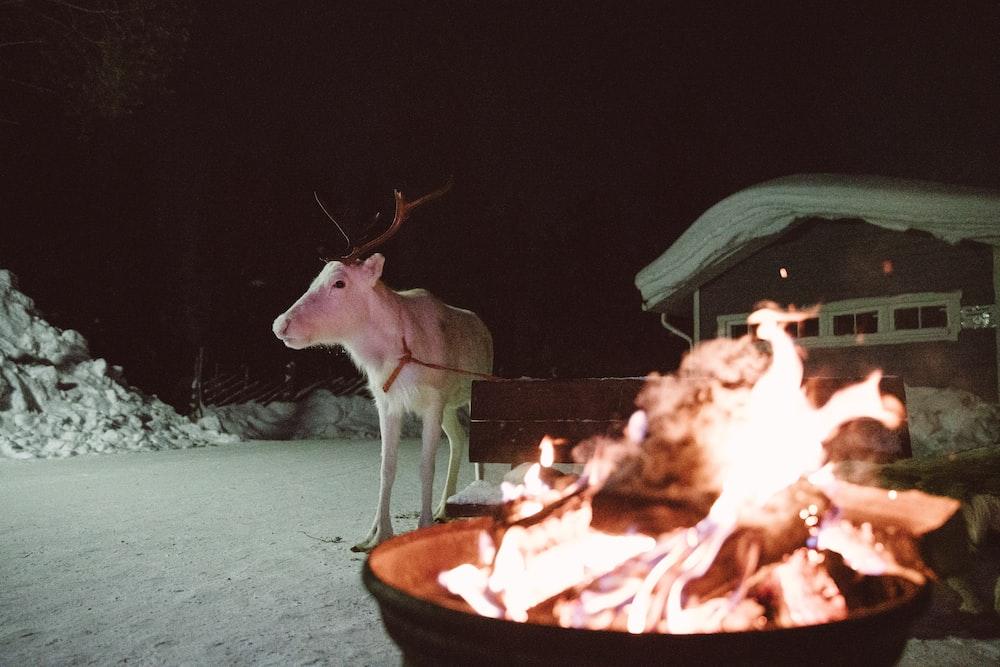 deer near bench behind fire during winter
