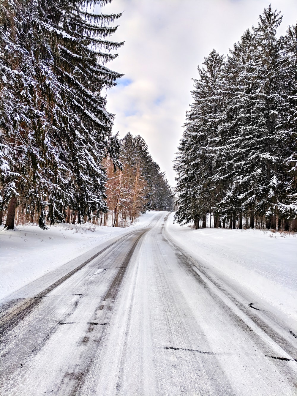 empty road between trees during winter at daytime