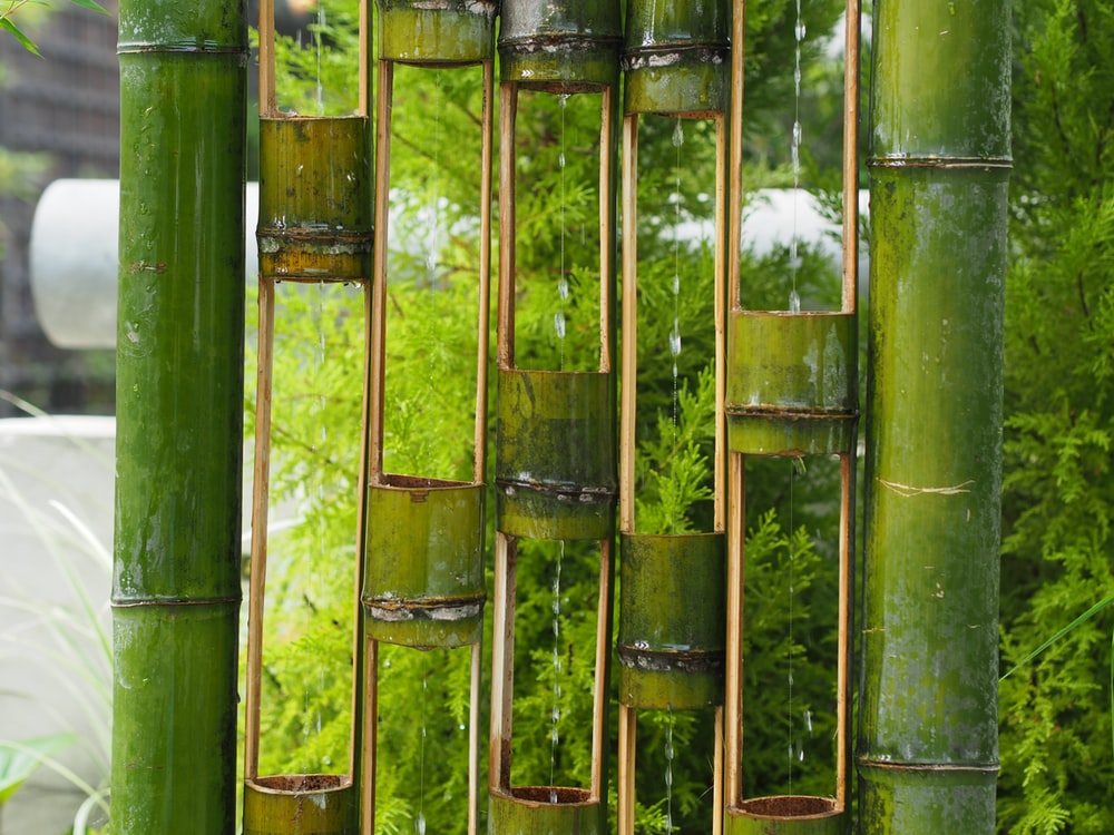 green bamboo plant in close-up photographt