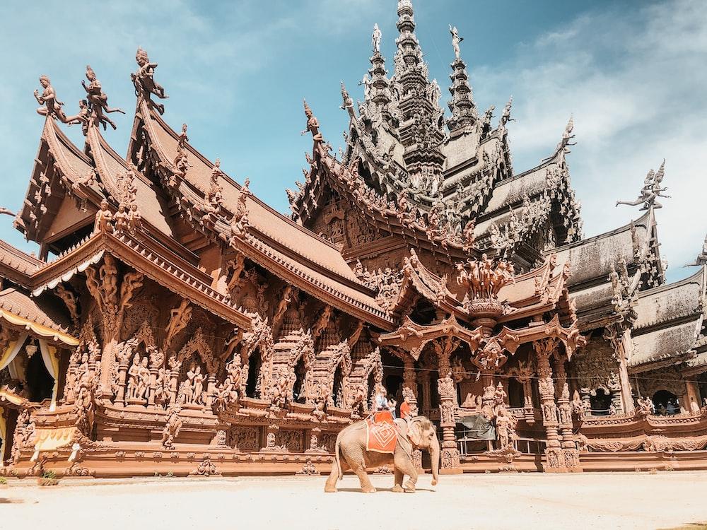 gray elephant near temple