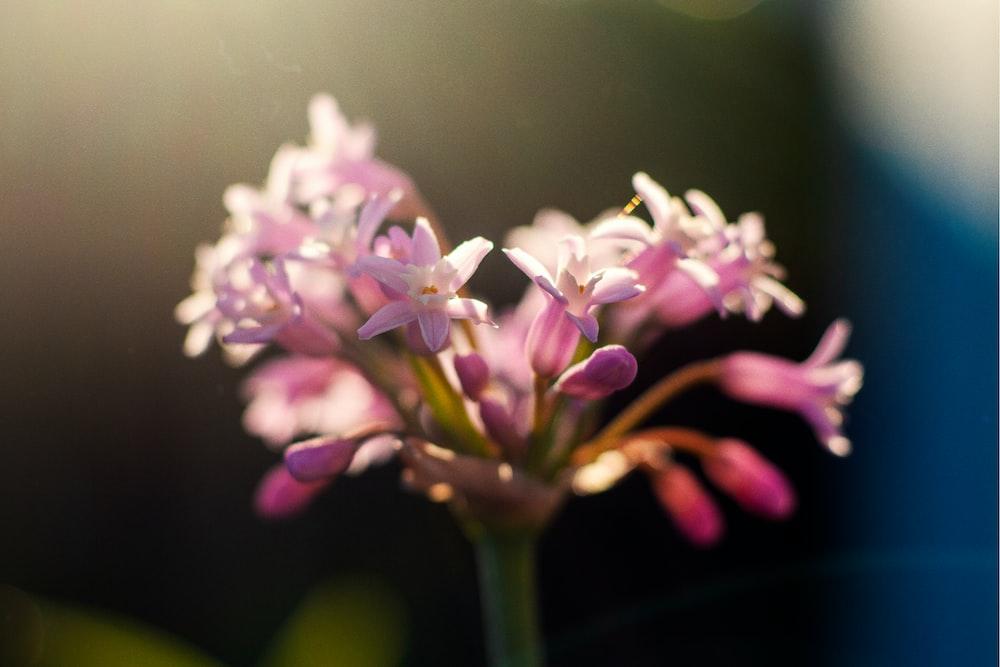 pink-petaled flowers in bloom
