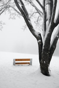 brown bench near trees