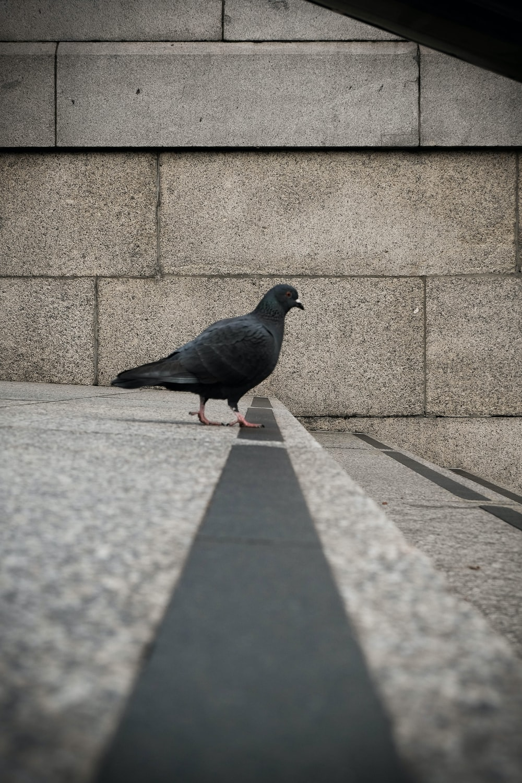gray short-beaked bird on gray concrete pavement during daytime