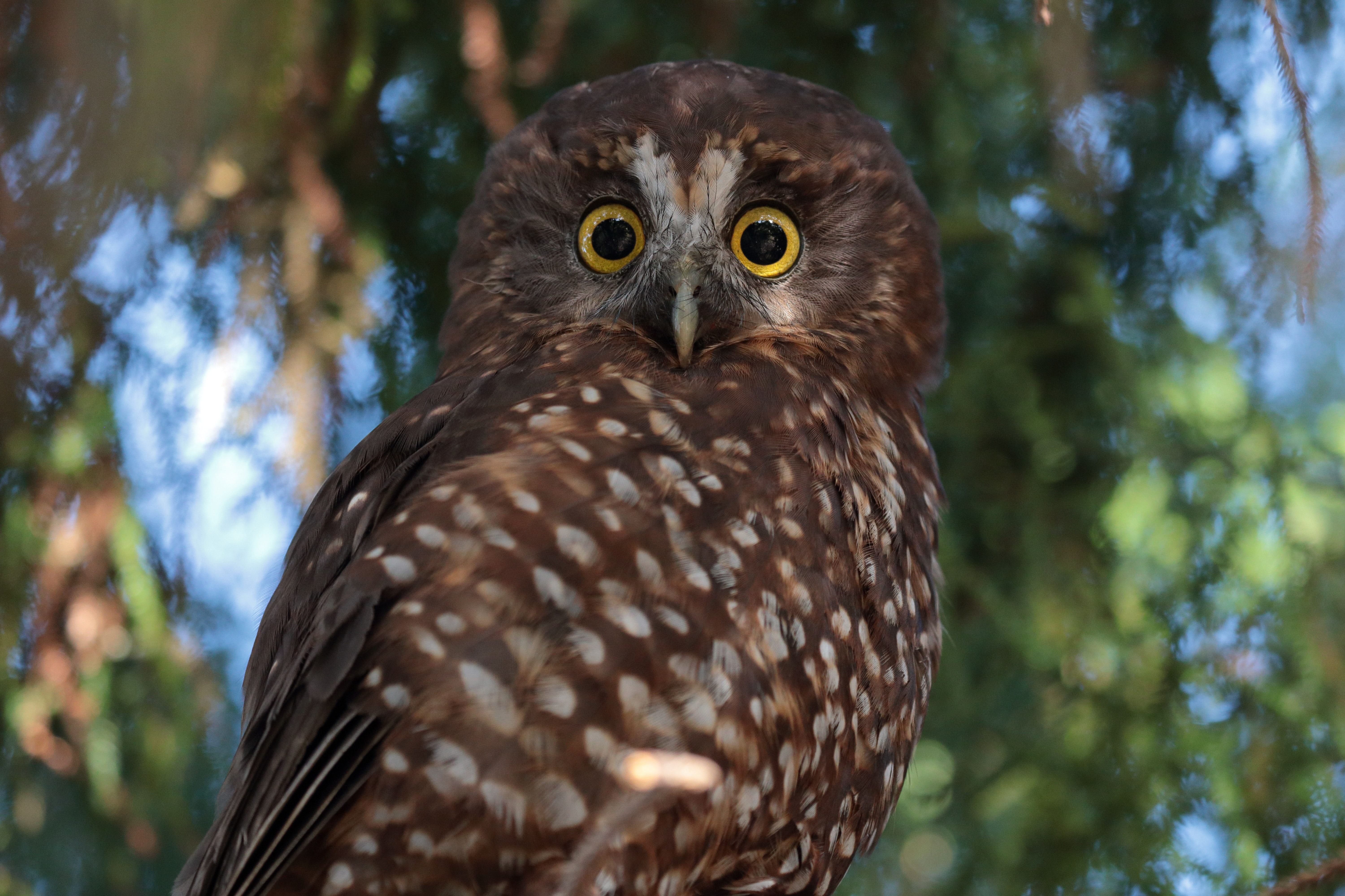 selective focus photography of wide-eyed brown owl