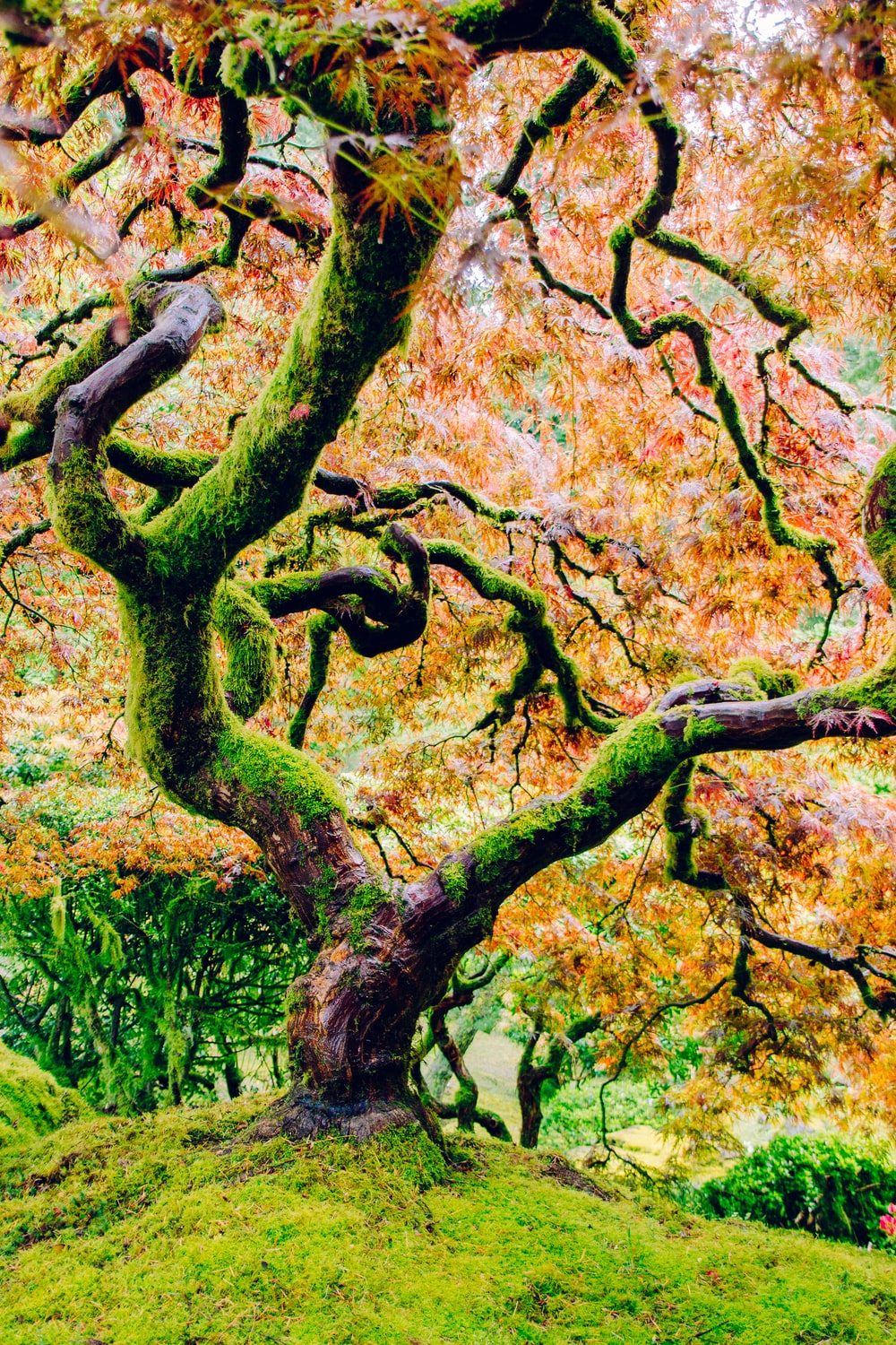 moss covered tree with pink leaves photo