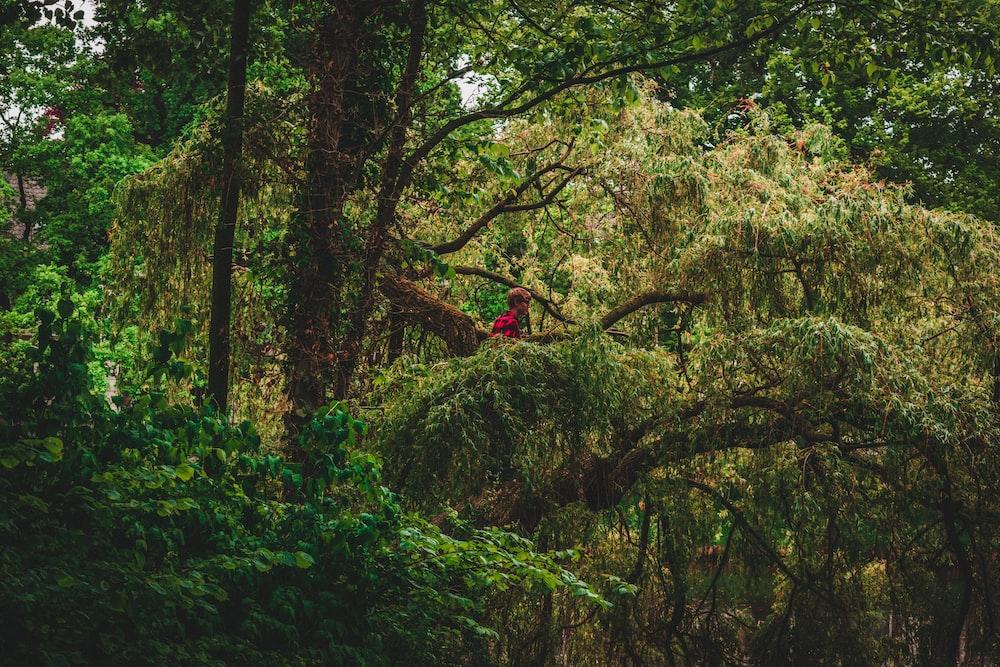 red bird on green nest