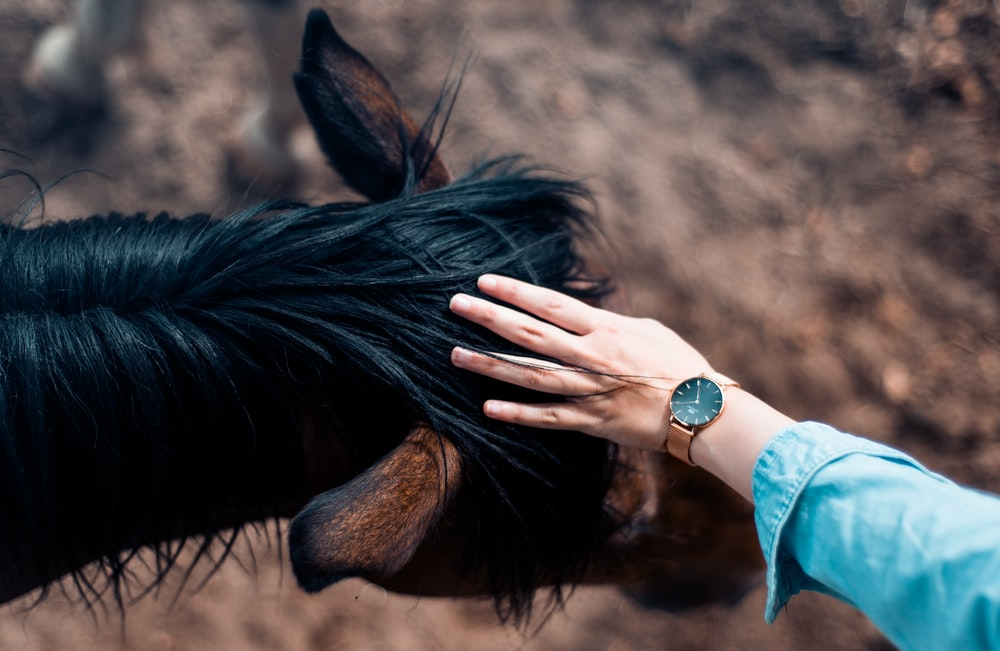 person touching horse head
