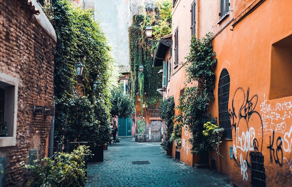 plants in alleyway