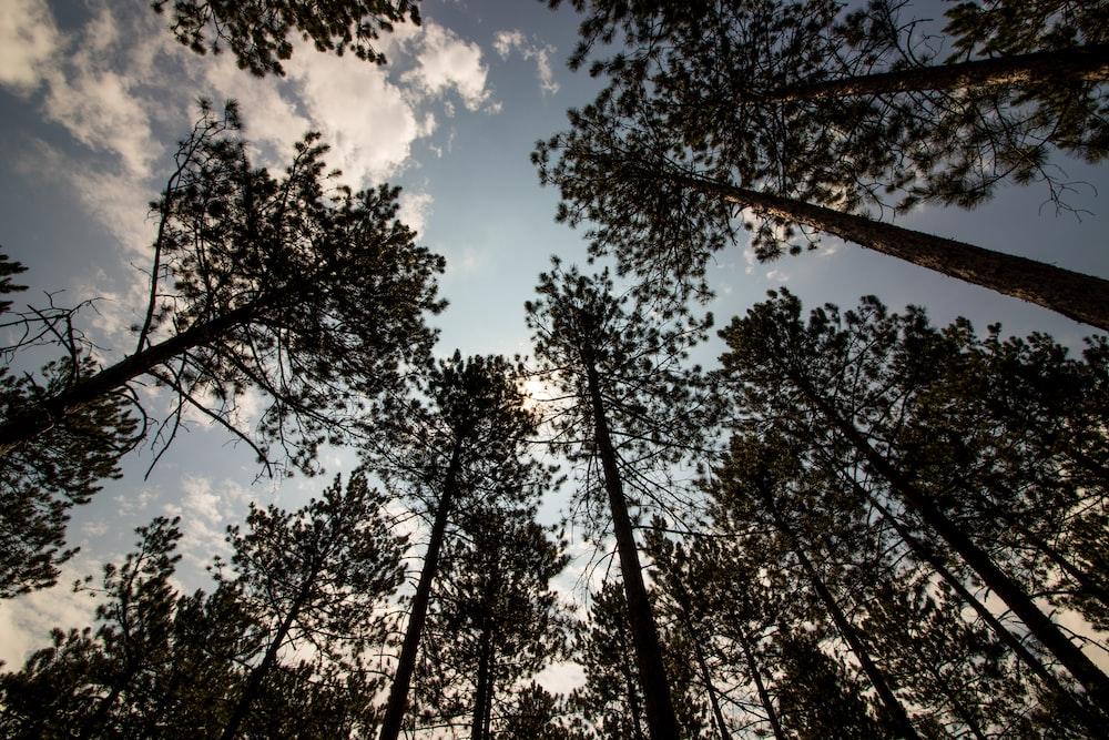 wormview photo of trees