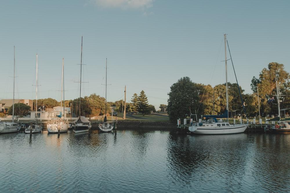 yacht docked beside trees under clear blue sky