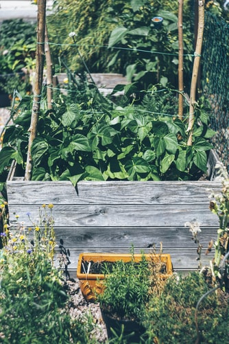 Disadvantages of Garden Raised Beds | Novice Guide To Installing Raised Garden Beds Efficiently