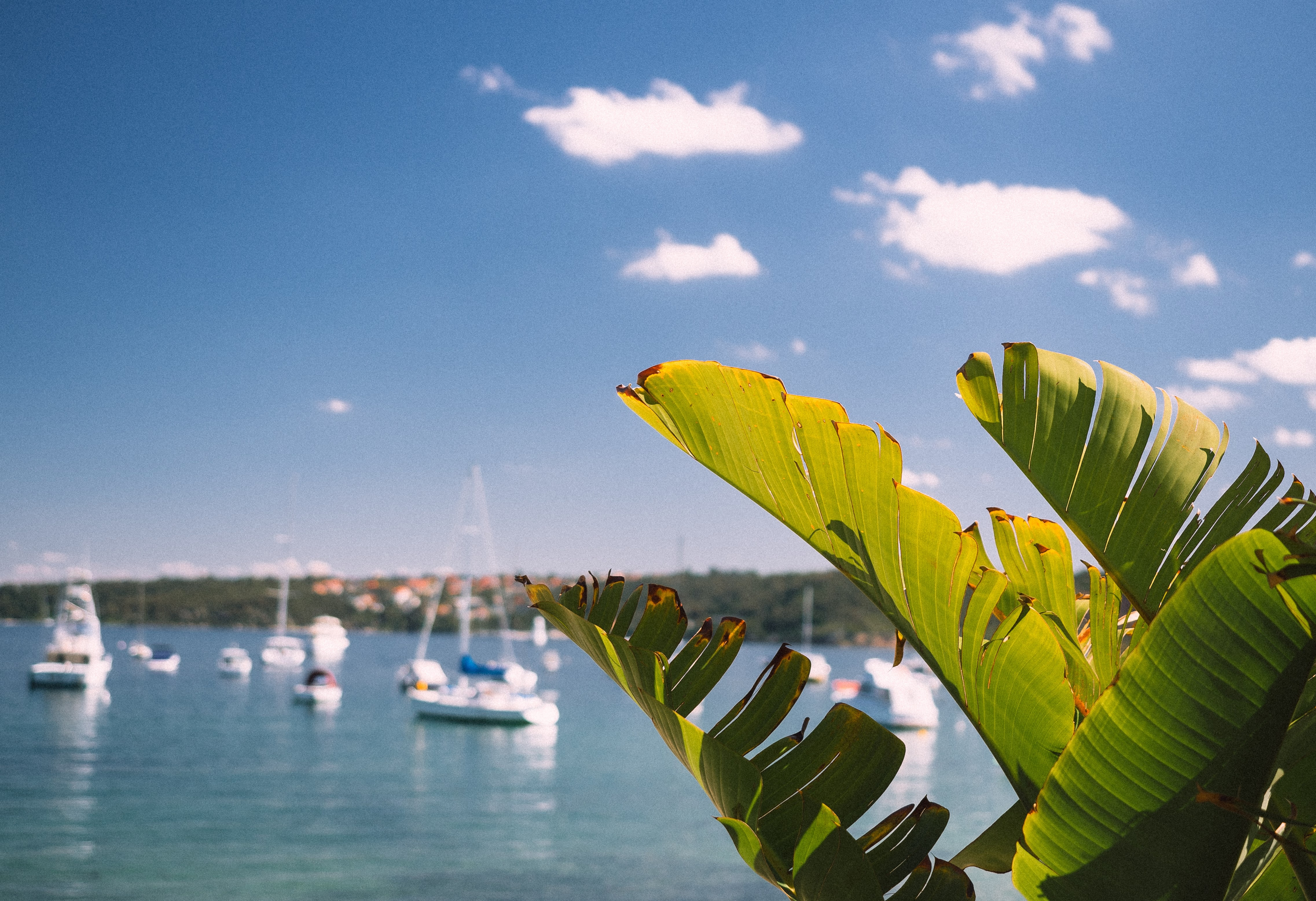 green palm plant beside boats on blue sea under white cloudy sky during daytime