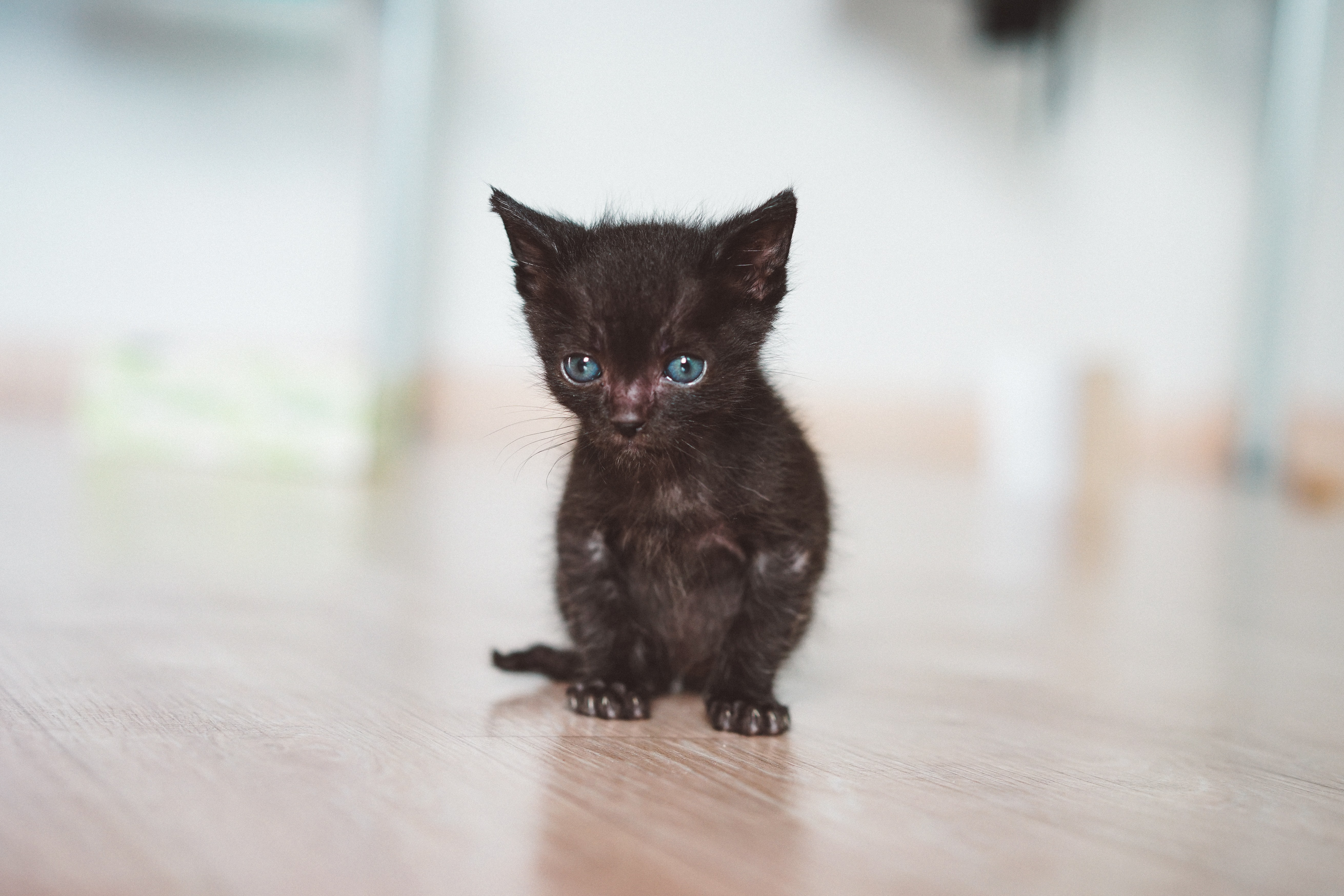 short-fur black kitten on brown wooden surface