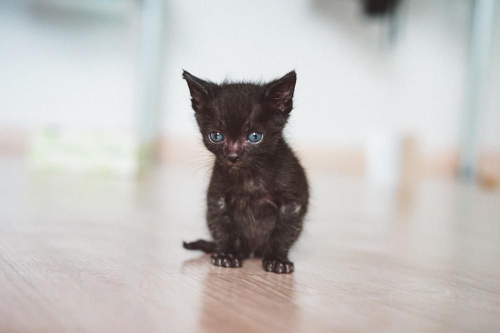 short-fur black kitten on brown wooden surface
