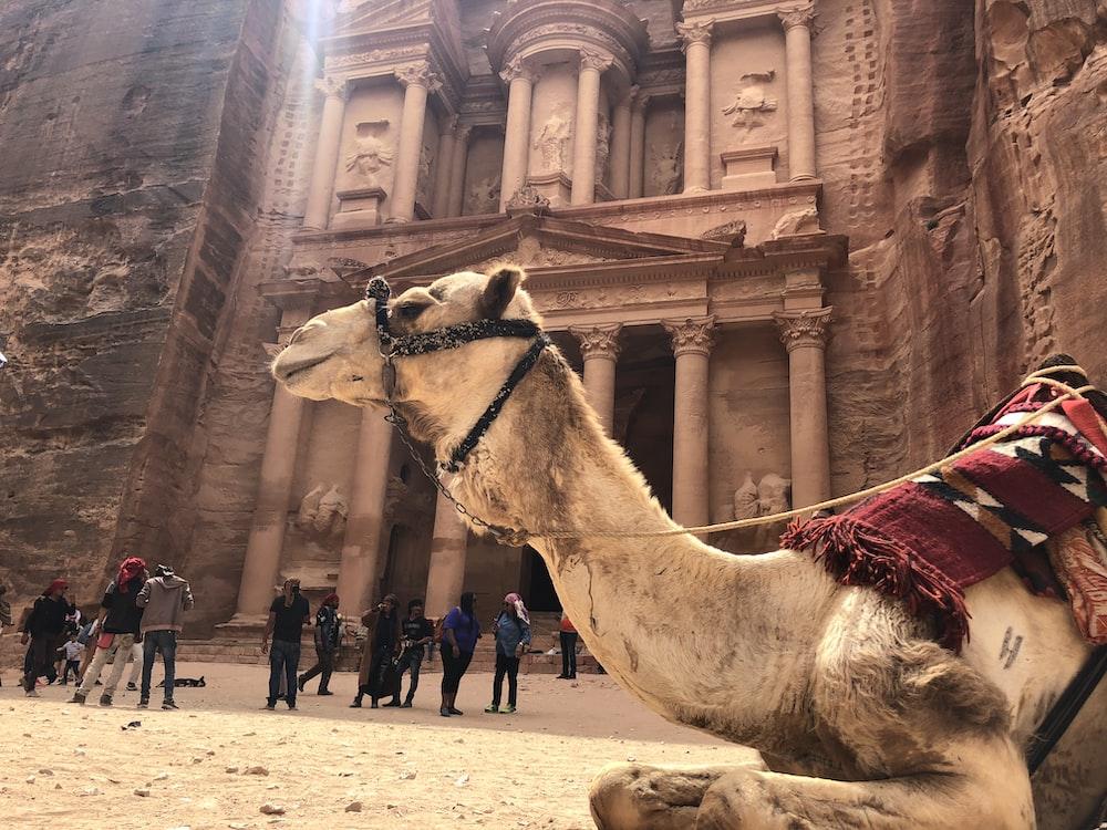 group of people standing beside Petra, Jordan