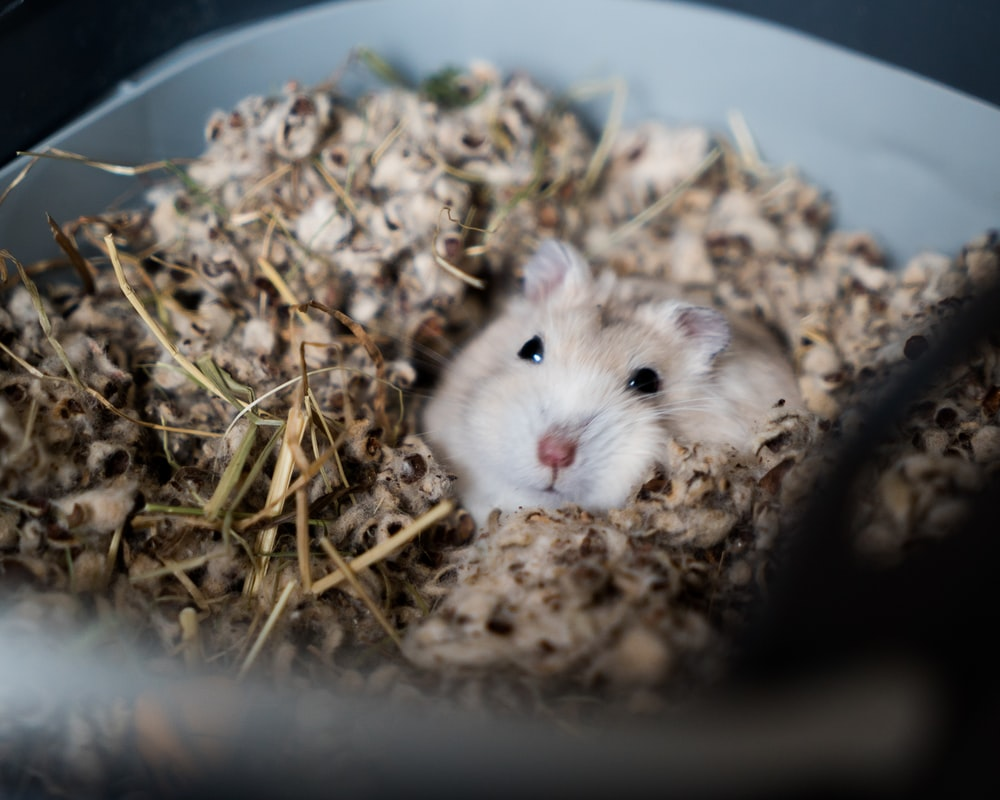 white rodent on cage