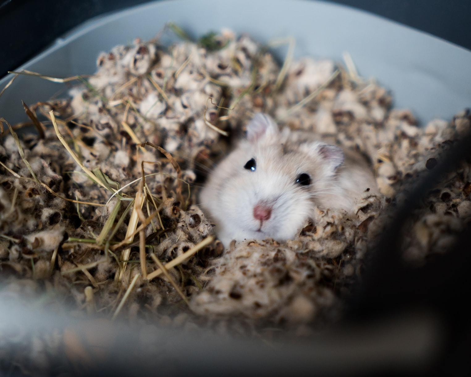 a hamster resting on its crib