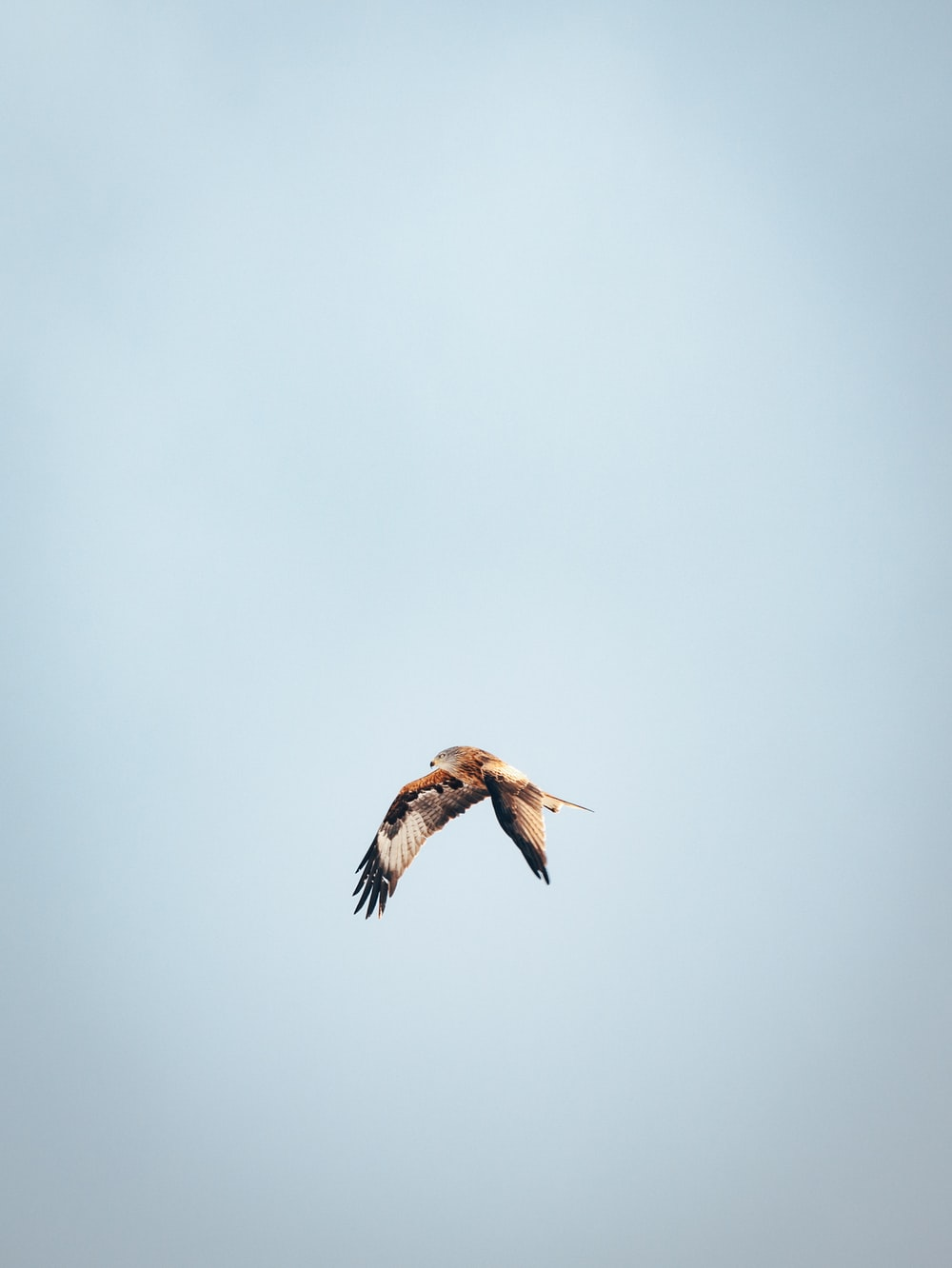 flying brown and white bird during daytime