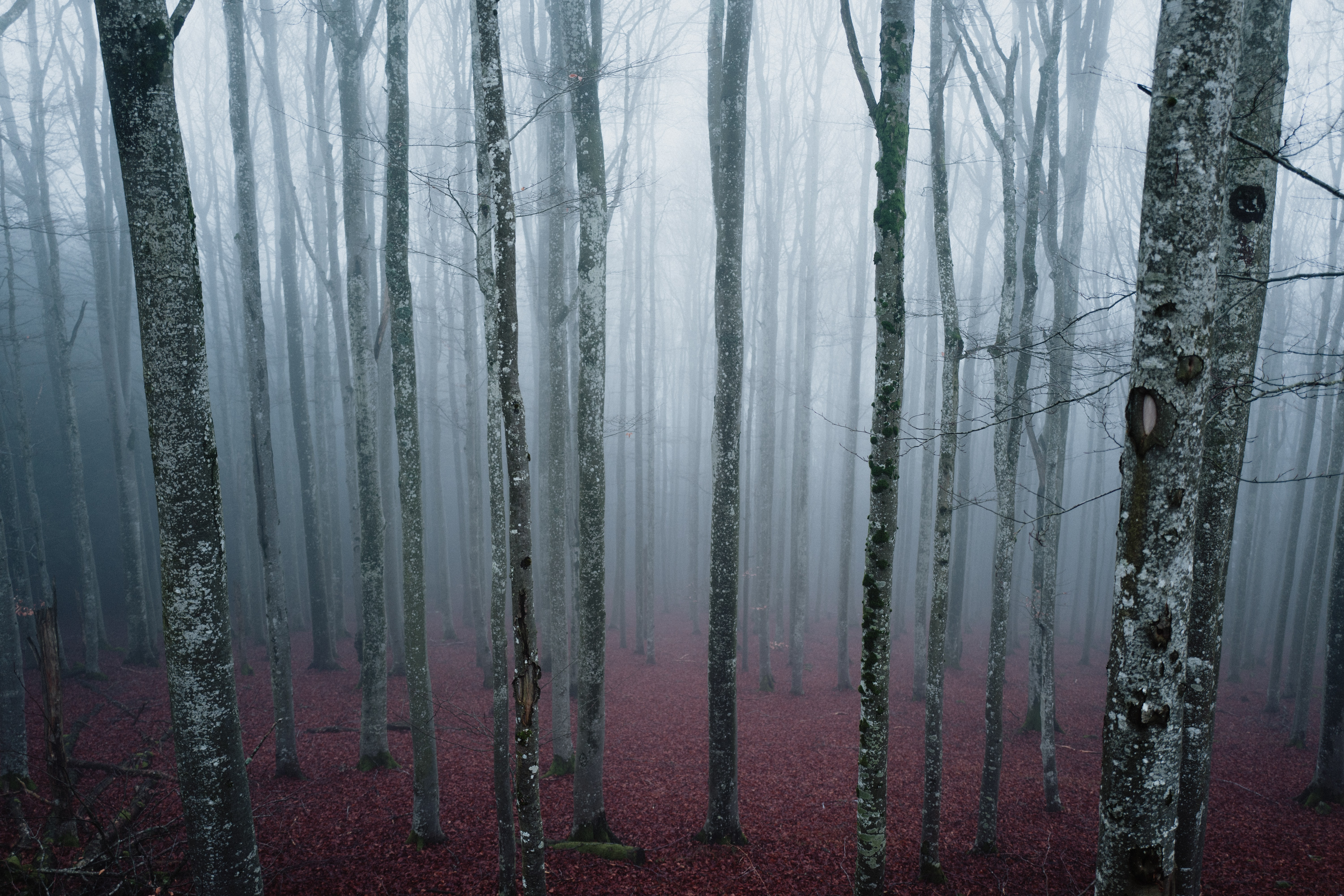 leafless trees with fogs during daytime