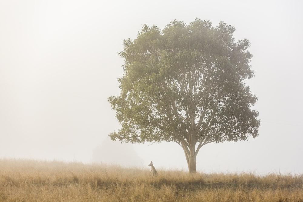 kangaroo standing under tree