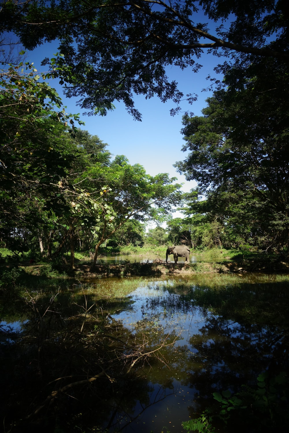 elephant near body of water