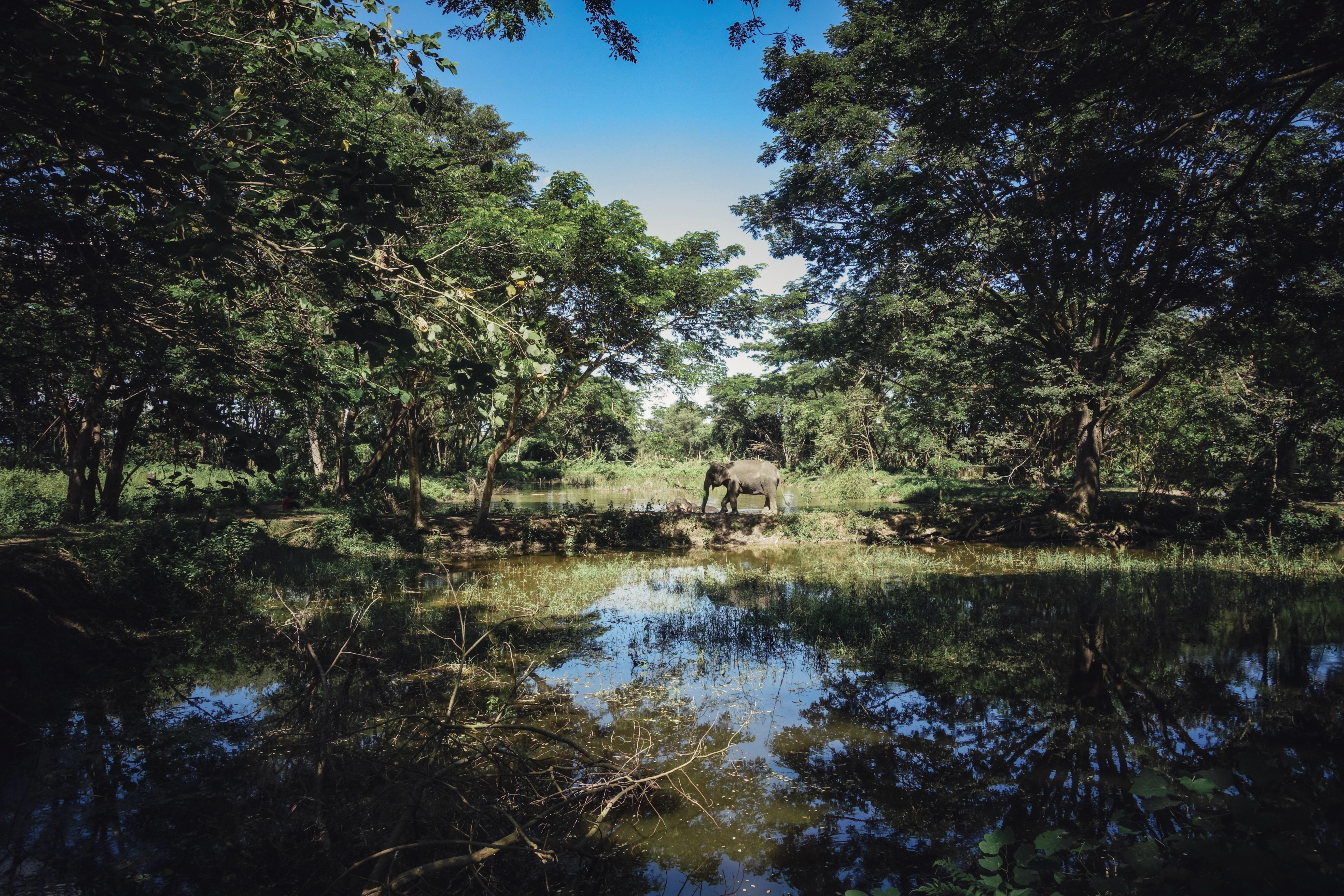 gray elephant near lake between trees at daytime