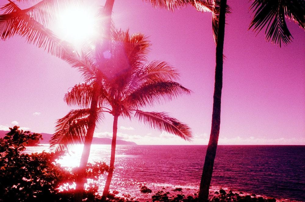 palm trees near seashore view
